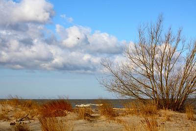 Along a Lakeshore!