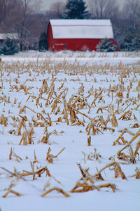 Stalks of Winter!