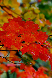Rainy Day Splash of Fall!  © 2010 Paul L. Csizmadia  All Rights Reserved  No Use Allowed without Permission