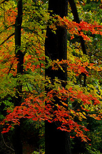Autumnal Spectrum!  © 2010 Paul L. Csizmadia  All Rights Reserved  No Use Allowed without Permission
