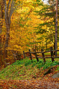 Leading to the Colors of Fall!  © 2010 Paul L. Csizmadia  All Rights Reserved  No Use Allowed without Permission