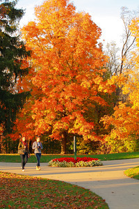Fall - A Time to Get Out and Enjoy the Seasonal Color!  © 2010 Paul L. Csizmadia  All Rights Reserved  No Use Allowed without Permission