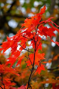Autumn & Fall - A Colorful Transition!  © 2010 Paul L. Csizmadia  All Rights Reserved  No Use Allowed without Permission
