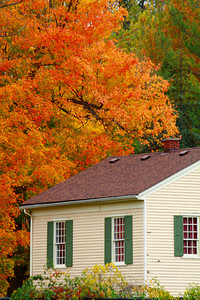 Surrounded by the Colors of Fall!  © 2010 Paul L. Csizmadia  All Rights Reserved  No Use Allowed without Permission