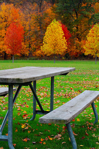 A Picnic of Fall Color!  © 2010 Paul L. Csizmadia  All Rights Reserved  No Use Allowed without Permission