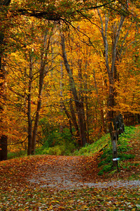 Fall - A Path of Seasonal Color!  © 2010 Paul L. Csizmadia  All Rights Reserved  No Use Allowed without Permission
