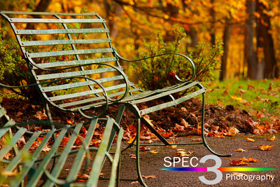 Surrounded by a Colorful Transition! - Fall  © 2010 Paul L. Csizmadia  All Rights Reserved  No Use Allowed without Permission
