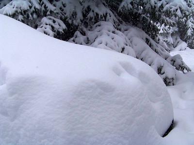 Snow Van!