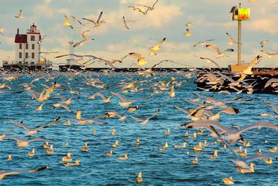 Gulls by Sea & Air!