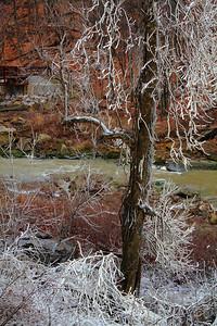 Frosty Frost - Near a Waterfall!