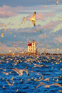 Just a Few Gulls!