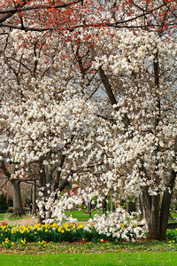 Springtime Blend!
