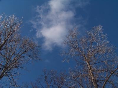 Iced Trees!
