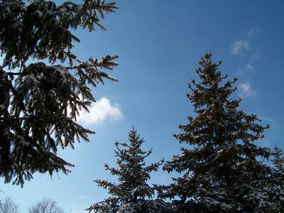 Spruce Sky!