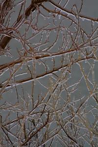 Winter's Gems!