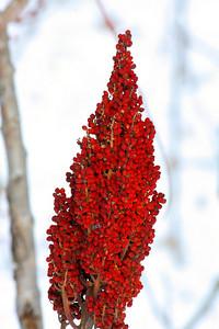 Winter Crimson!