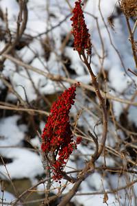 Winter's Brilliance!