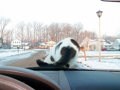 Cat on the Hood!