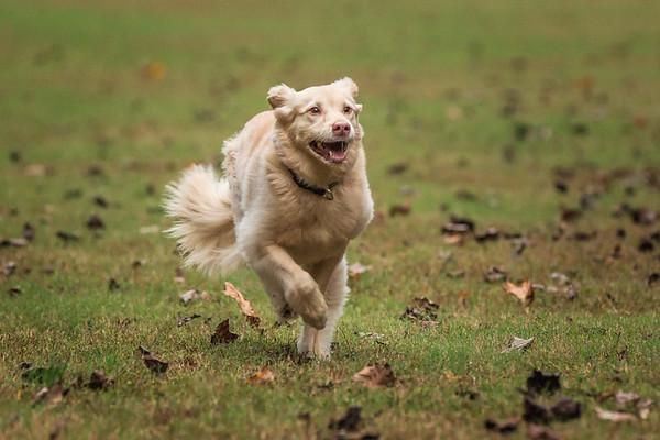 Portrait of dog taken in Alpharetta
