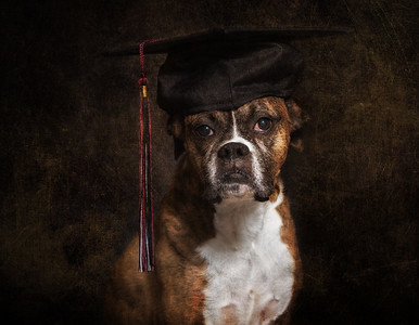 Dog Portraits in Alpharetta