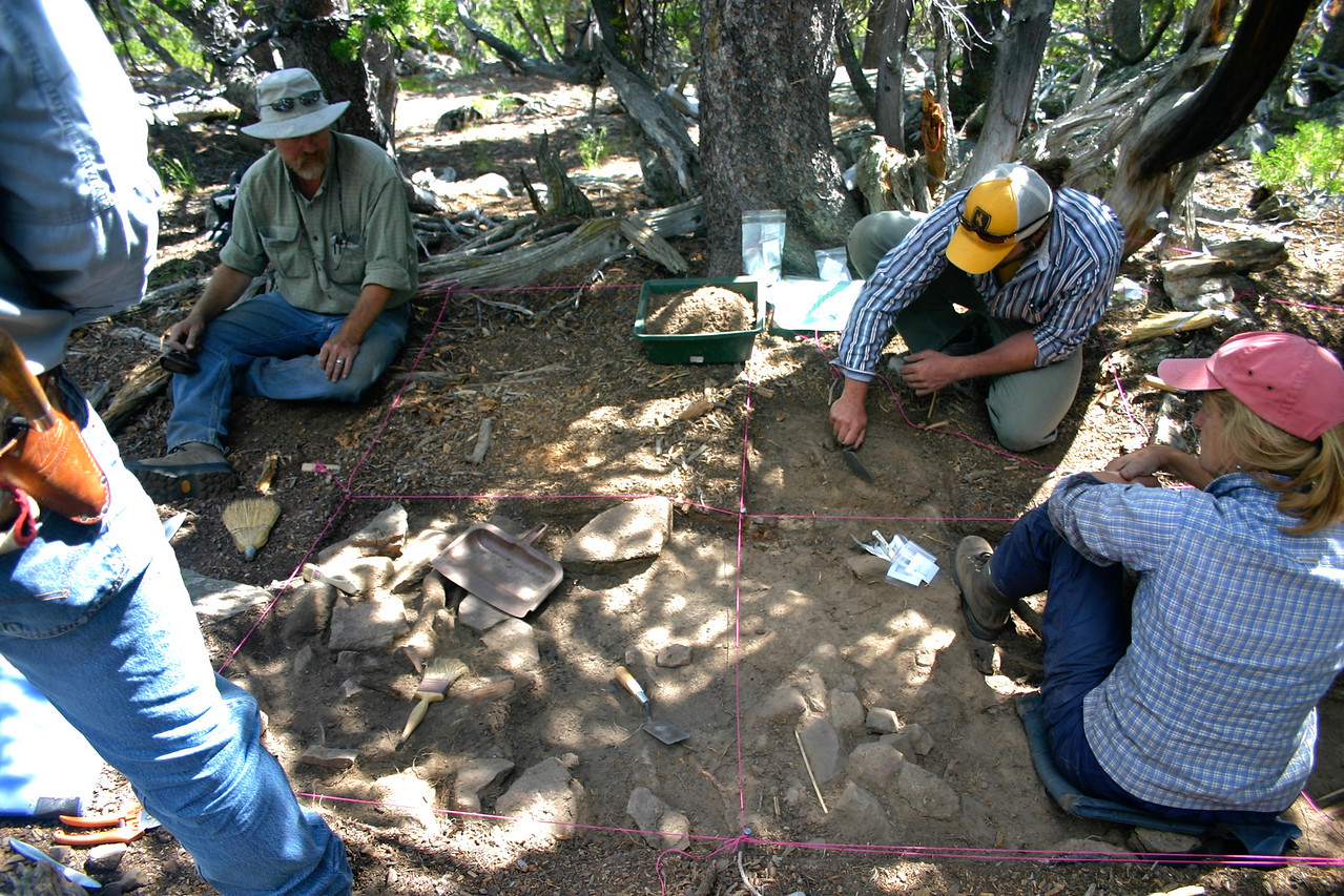 Archaeologists excavate a prehistoric house structure amongst a thick stand of whitebark pine.