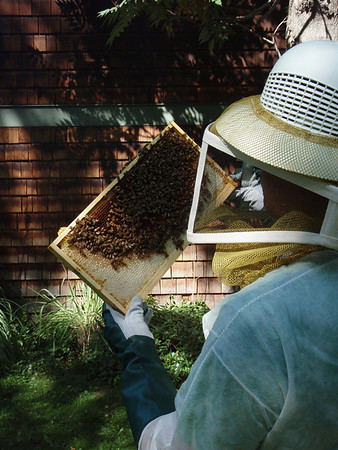 Chris Beckmann - Beekeeping 2008