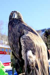 Nature Valley Raptor World Cup at Beaver Creek, CO - home of the 2015 FIS Alpine World Ski Championships John Dakin/Vail Valley Foundation