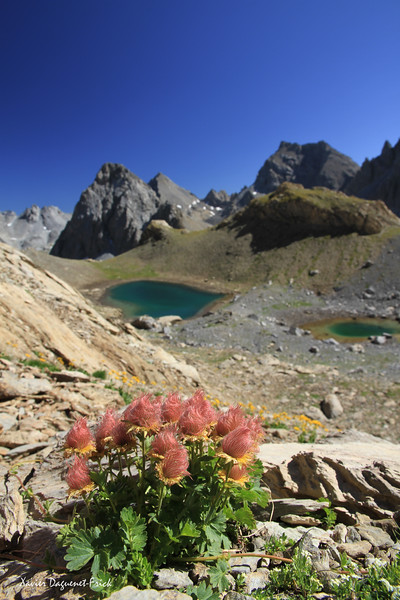 French Alps - Summer