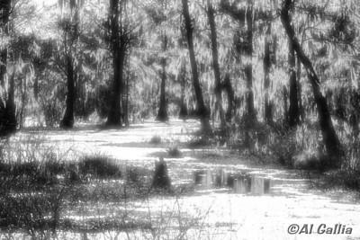 "©Al Gallia; ""Silver Bayou""; Cypress Island Preserve, Louisiana; Enhanced infrared effects."