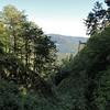 L'épaisse forêt laisse parfois entrevoir les crêtes. [Photo JC]