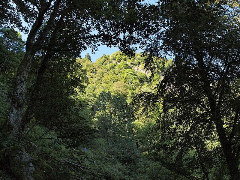 Seule au milieu de cette immense forêt... [Photo JC]