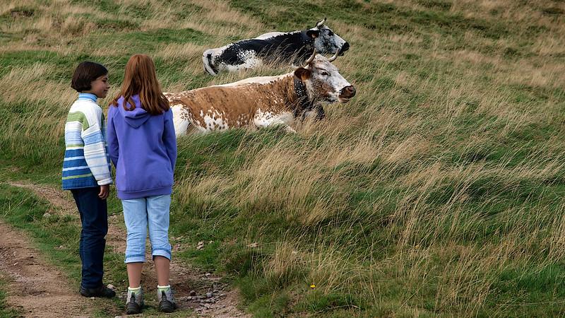 """Alex : """"Ben si, c'est des vraies vaches ! On va les caresser ?"""" [Photo JC]"""
