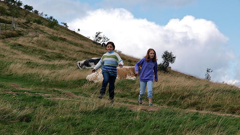 """""""Oh la vache, on n'aurait peut-être pas dû..."""" [Photo JC]"""