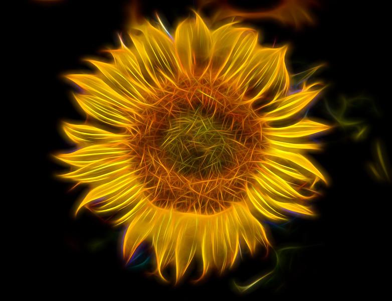 Flaming Sunflower 6749