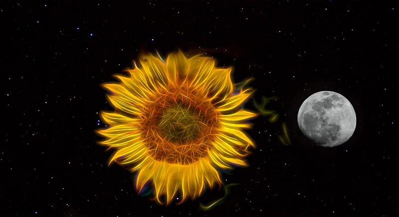 Flaming Sunflower, Moon & Stars