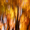 Maple Tree ICM