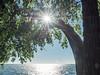 Morning Sunburst over Lake St Clair