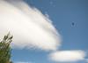 Bird, Tree, and Unusual Cloud, Hat Creek CA