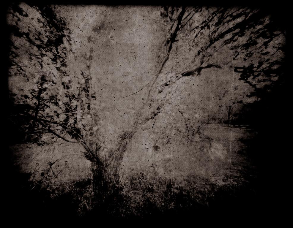 Orchard Metamorphosis
