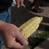 Peruvian corn / maize with 3 times the usual size. But this cannot be used for popcorn.