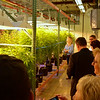 Grow room inside the Coy Waller Research Facility.