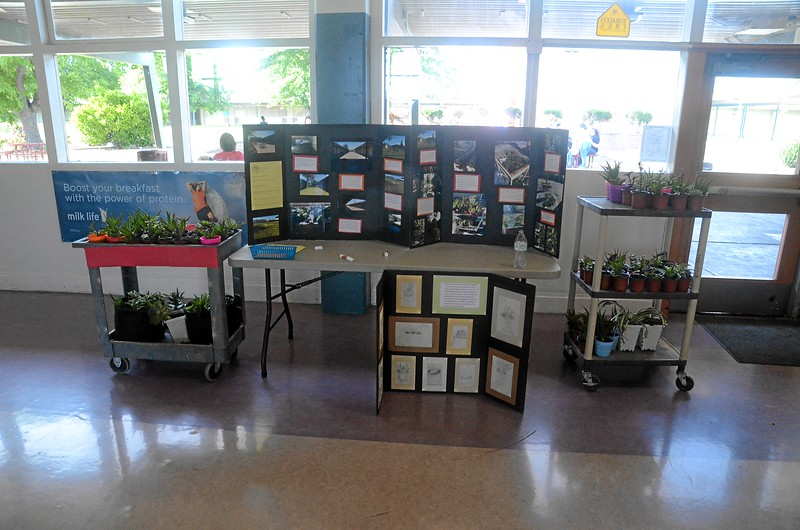Student plant project