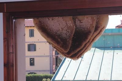 06.09.2015 - ALVERARE IN VIA SAN LORENZO NONANTOLA-006
