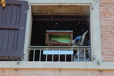06.09.2015 - ALVERARE IN VIA SAN LORENZO NONANTOLA-024