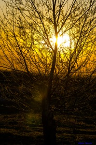 AlyciaC: Golden Hour