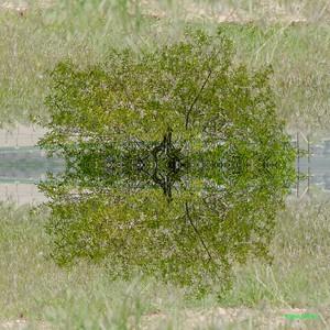 AlyciaC:Mirror Montage 37