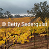 Fall Vineyards, Shenandoah Valley