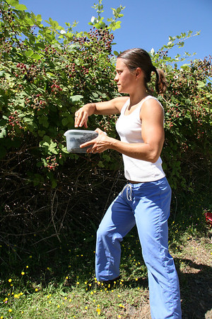 Amanda guns picking Blackberries Creswell Oregon