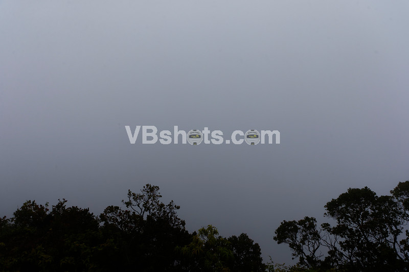 Got to the very top of Waimea Canyon, and it was up in the fog.  Nothing to see here.