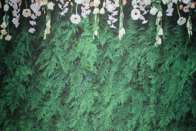 Green fern backdrop (9 ft wide)